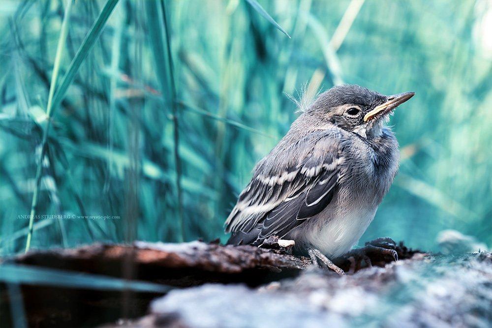 Bird-140615-030.jpg