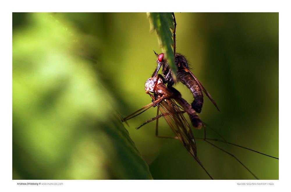 bug-sex.jpg