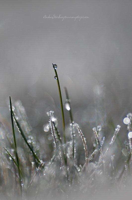 Dew-110507-023.jpg