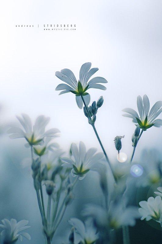 Floral-090623-002-2.jpg