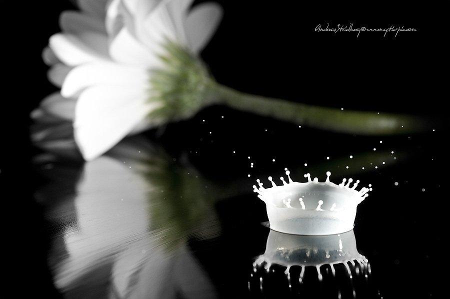 Floral-100225-097.jpg