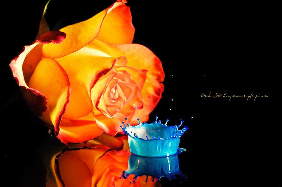 Floral-100225-101.jpg