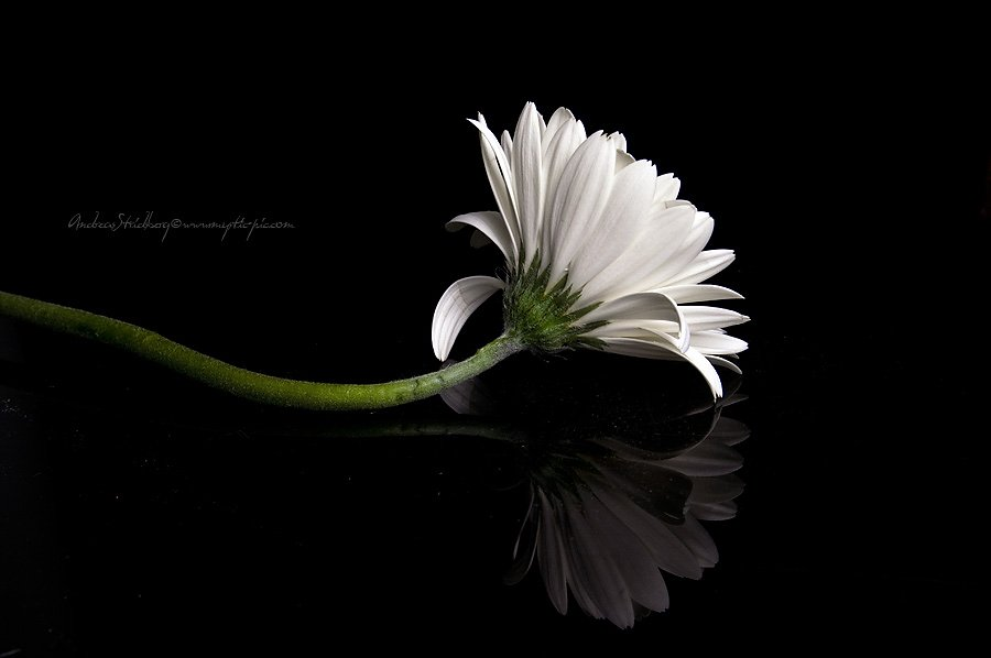 Floral-100225-TRIO-1.jpg