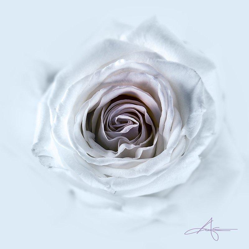 Floral-130223-003.jpg