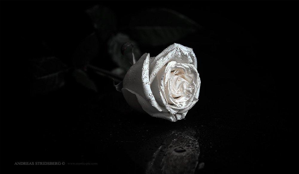 Floral-130223-022.jpg
