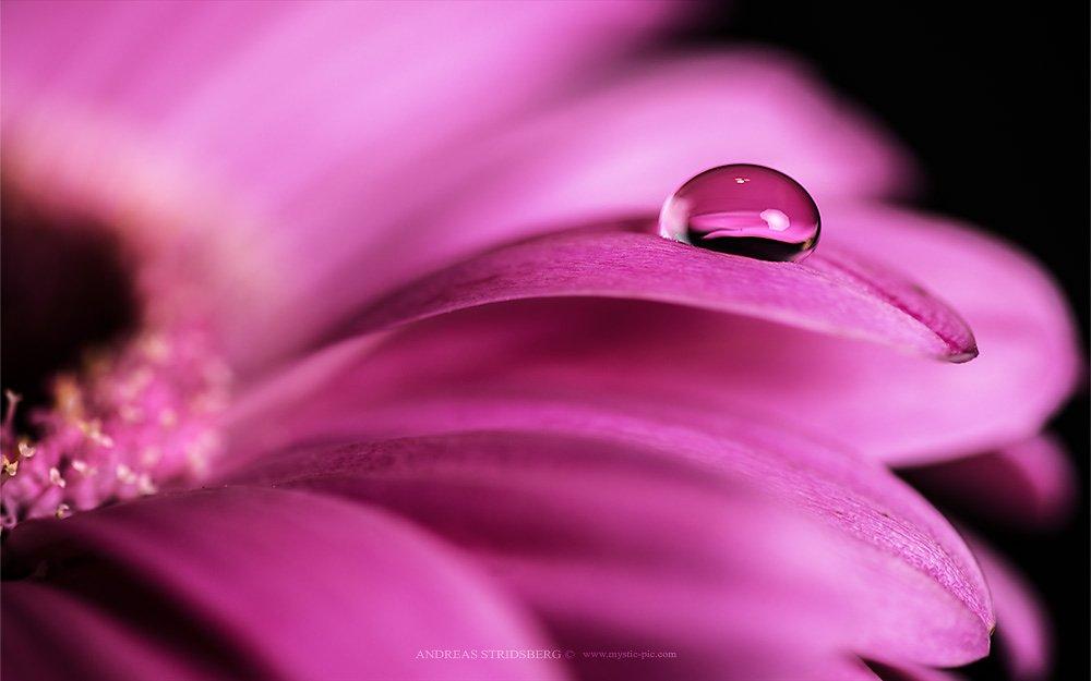 Floral-130223-029.jpg