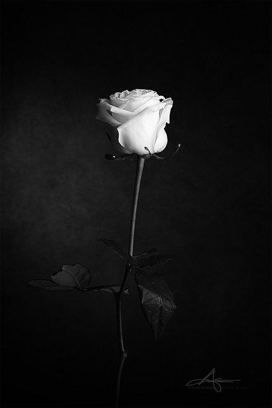 Floral-130224-047.jpg