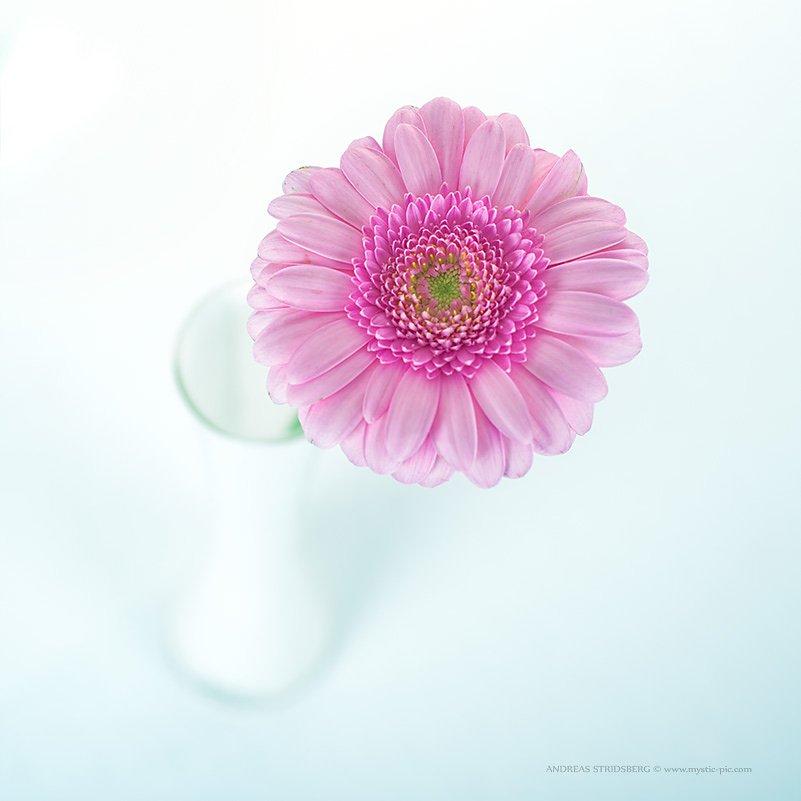 Floral-130422-002.jpg