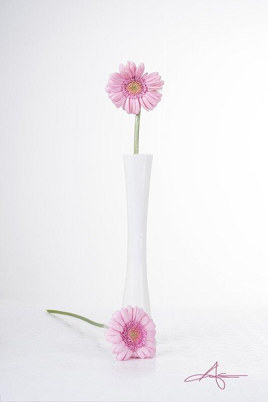 Floral-130422-008.jpg