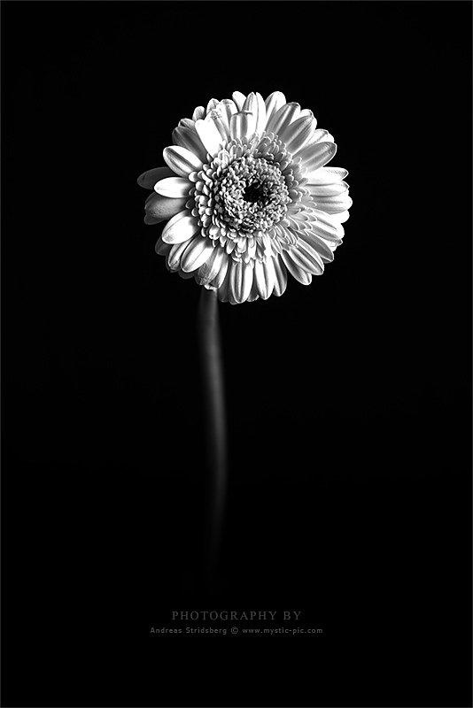 Floral-130422-028.jpg