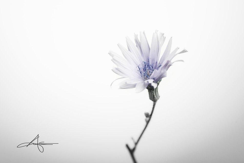 Floral-140727-017.jpg