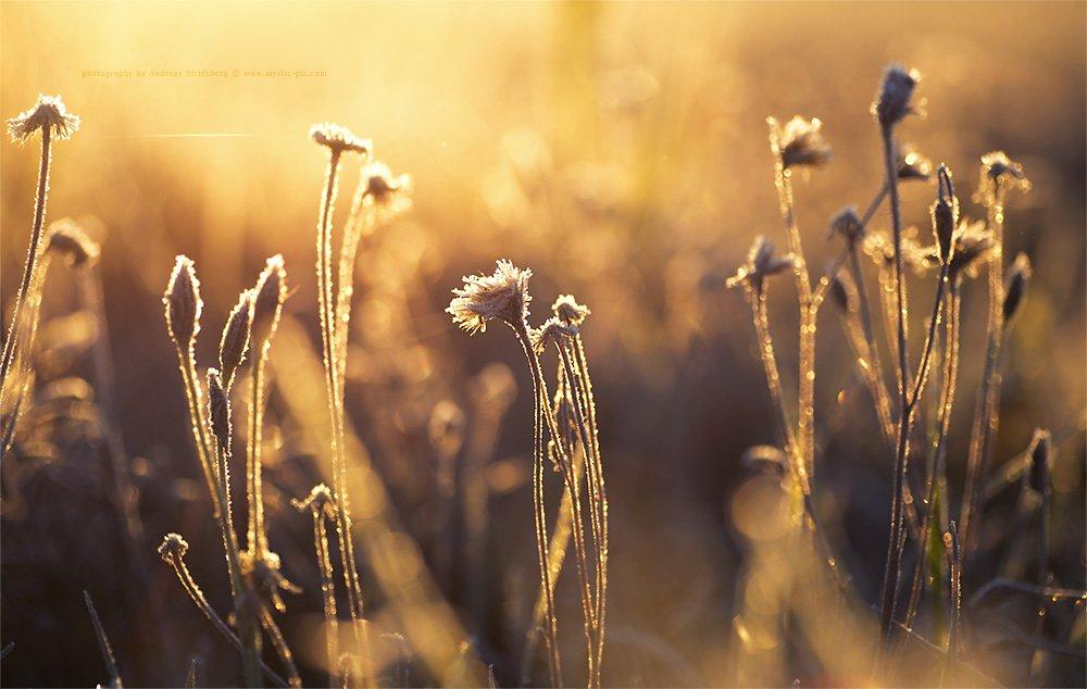 Nature-121020-019.jpg