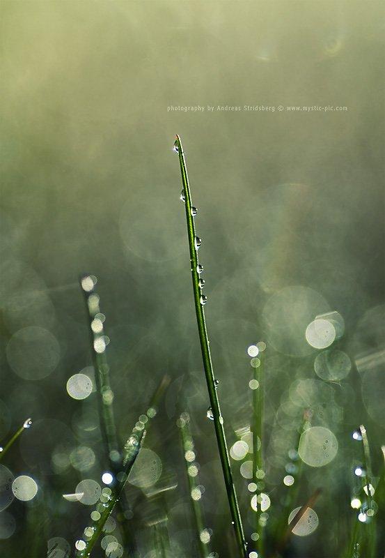 Dew-110507-004.jpg
