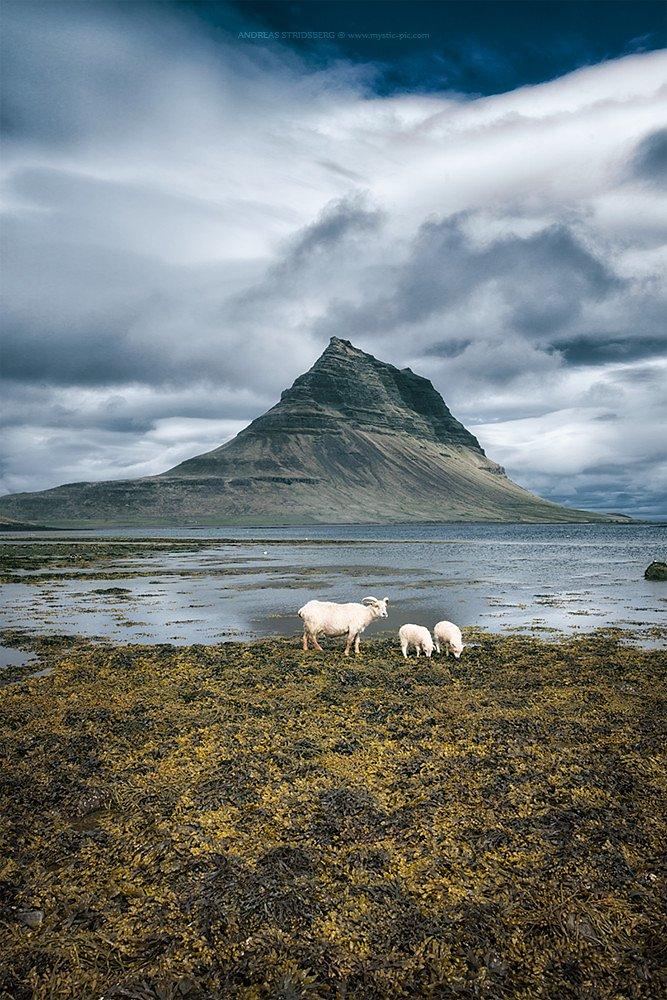 Island-150617-103.jpg