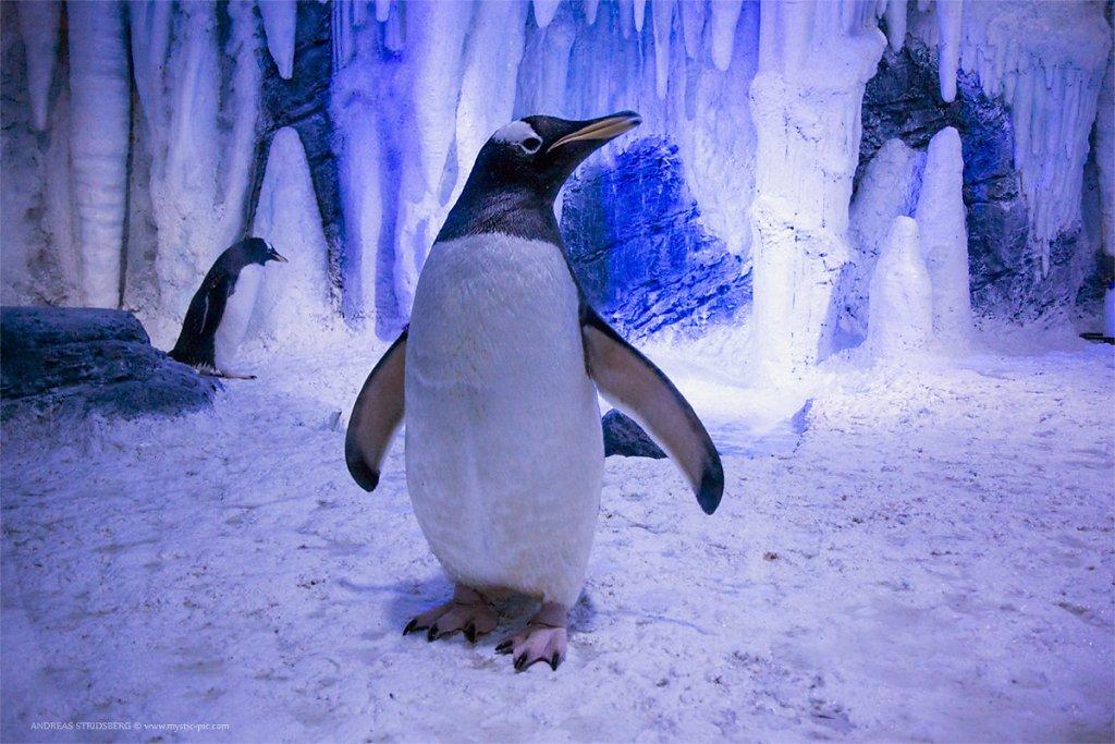 pingvin-sealife.jpg