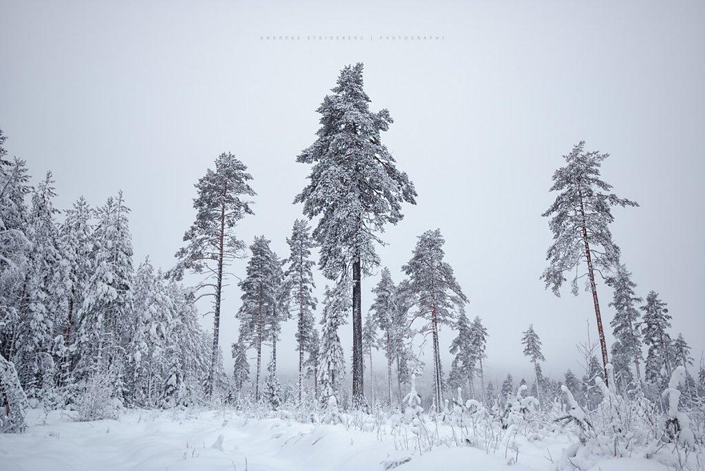 Nature-170112-033.jpg