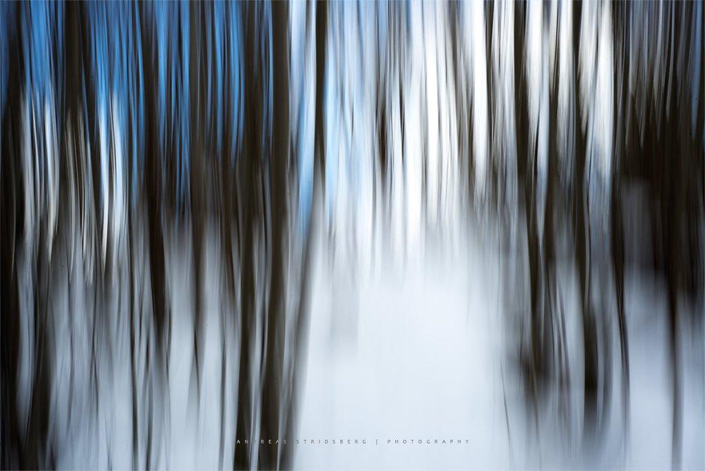 AbstractForest-170323-009.jpg
