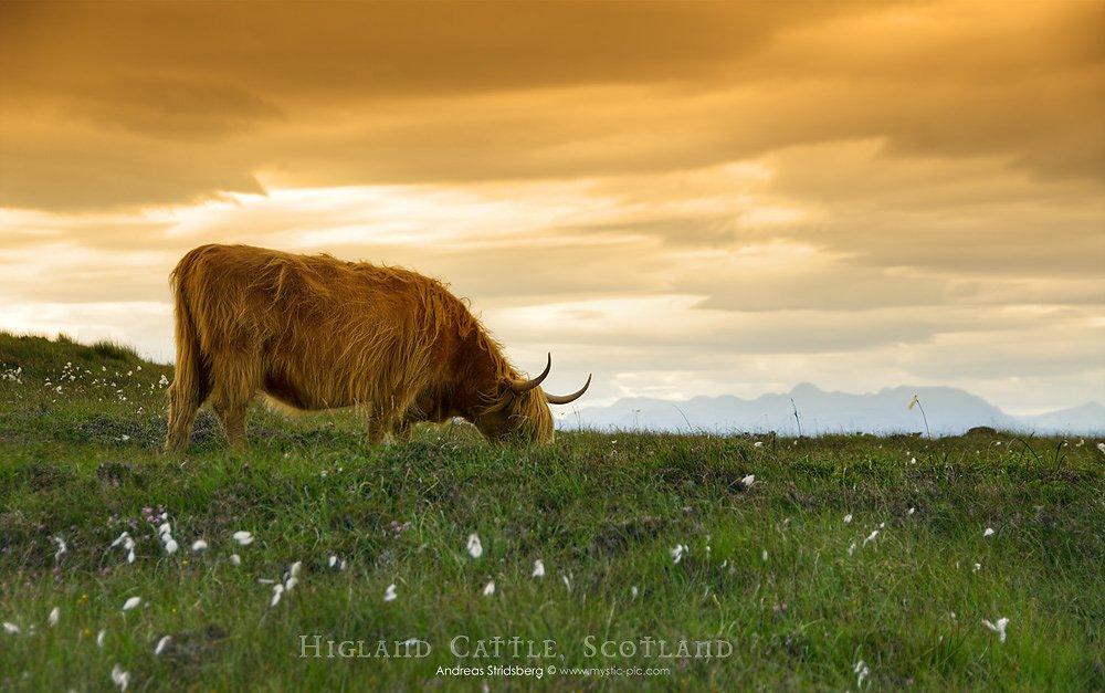 Scotland-D200-080730-266.jpg