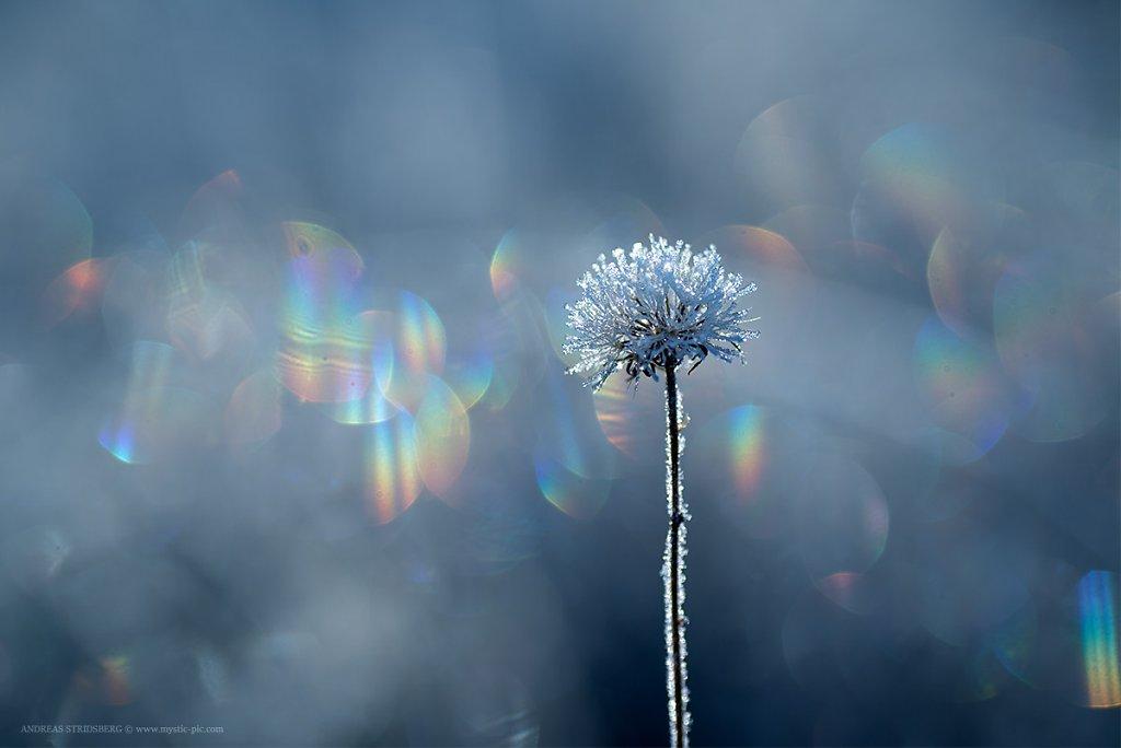 Frost-161012-021.jpg