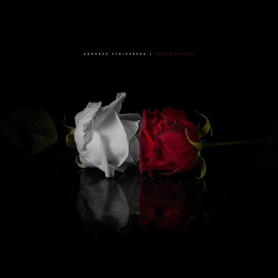 rose-kiss.jpg