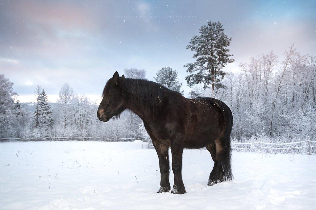 Horses-181218-029.jpg