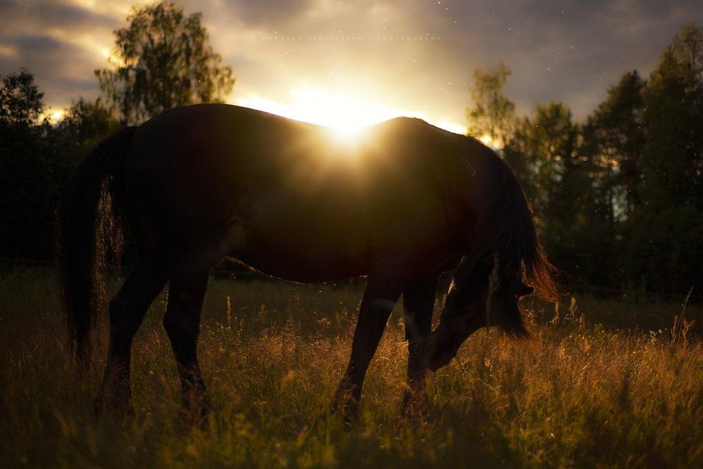 Horses-180629-044.jpg