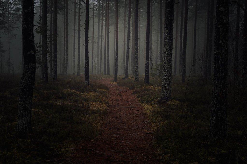 Nature-191124-039.jpg
