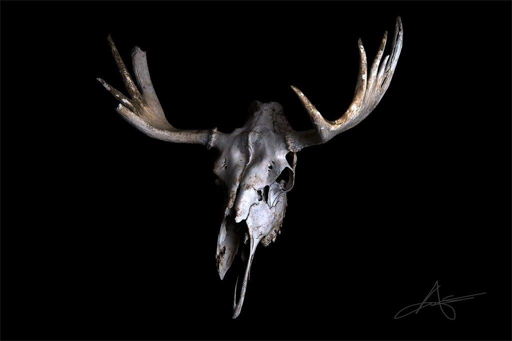 Skull-200617-003.jpg