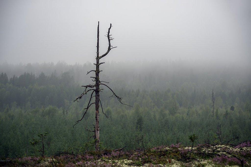 Nature-200803-004.jpg