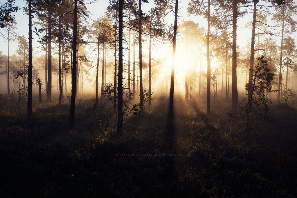 Nature-200902-161.jpg
