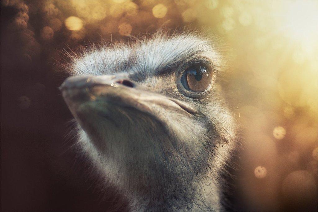 Ostrich-200808-013.jpg