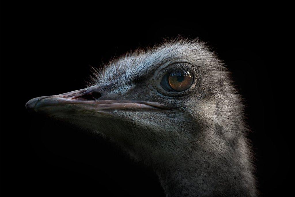Ostrich-200808-016.jpg