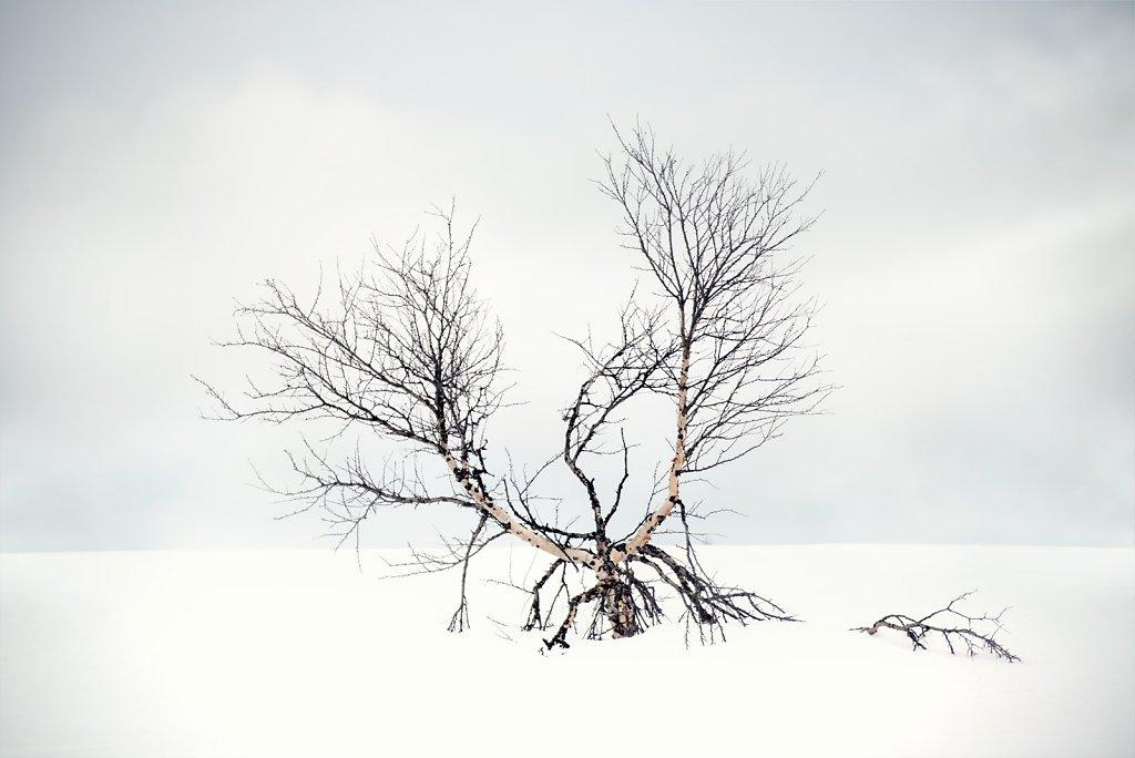 Nature-210317-123.jpg
