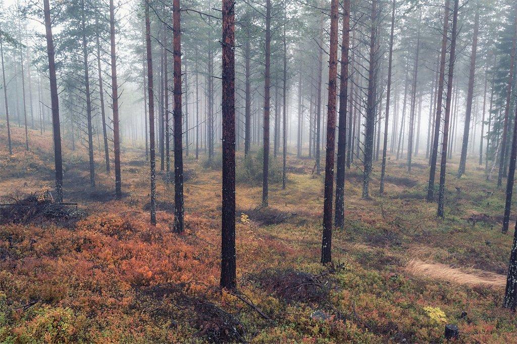 Nature-210912-002.jpg