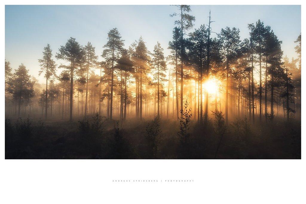 Nature-200902-122.jpg