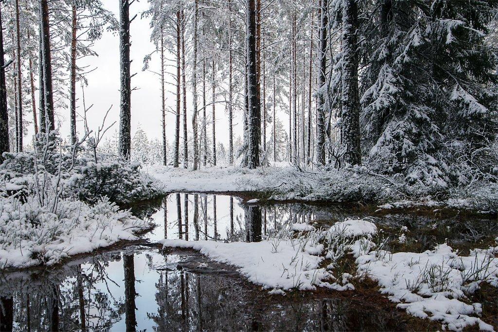 Nature-201119-198.jpg